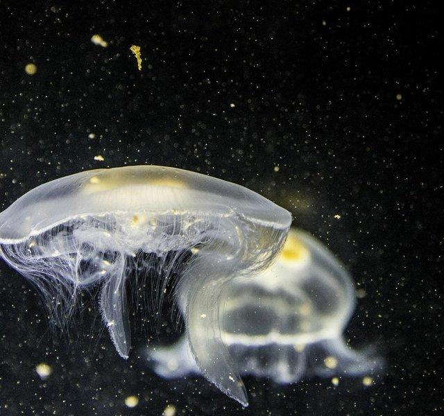 Parafrase aflevering 3: De stille zeeën