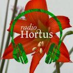 Aflevering 19 – Amaryllis & aanverwanten