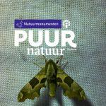 Puur Natuur: Op nachtvlinderjacht in het Deelerwoud met nachtvlinderaar Jeroen Voogd